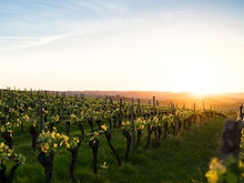 Plan Your Wine Adventure And Start Sipping, NSW's Cellar Doors Will Also Open On Monday