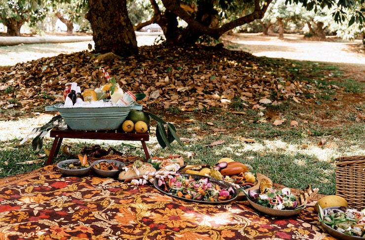 A picnic rug, complete with a spread of food and drink, sits underneath the trees in an avocado orchard.
