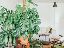 Green Up Your Home With These Brisbane Plant Delivery Services