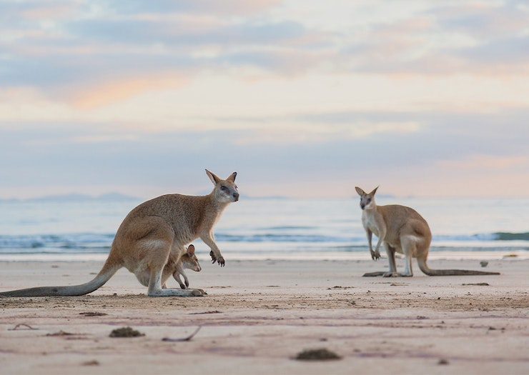 Catch The Sunrise At 10 Of The Most Stunning Beachside Camping Spots In Queensland