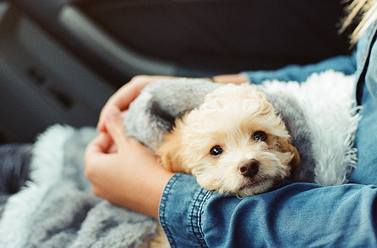 rspca dog adoption drive