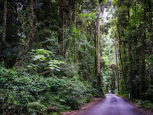 Fill Up The Tank, Here's 4 Road Trips To Take Within 50km Of The Gold Coast