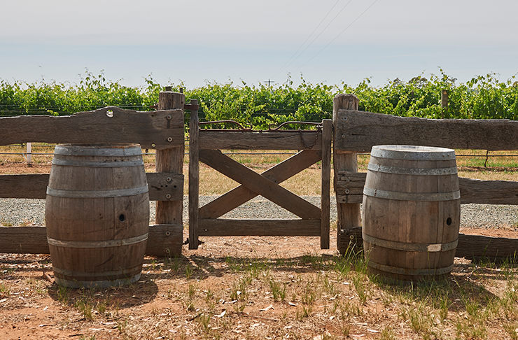 A wooden gate with wine barrels on either side which open up to the Shiraz Republic vineyard.