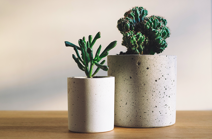 succulent-delivery-brisbane