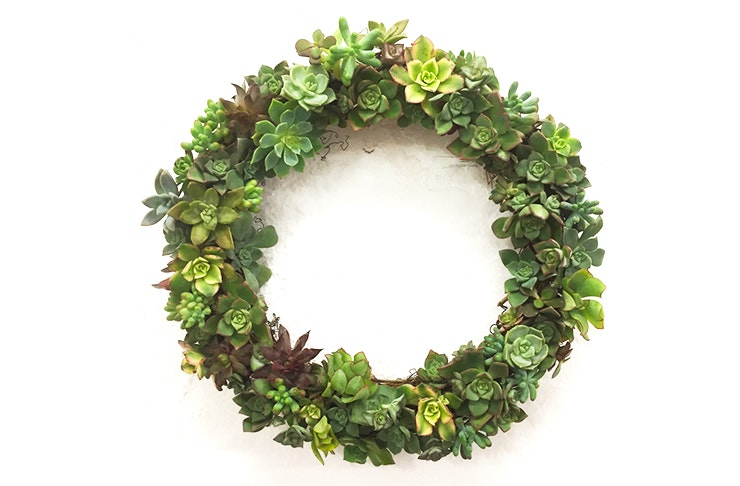 succulent-christmas-wreath