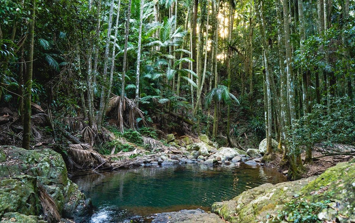 Aqua pool of water in a rainforest