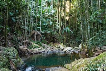 A creek running through a shady rainforest.