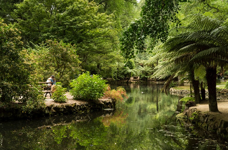 things-to-do-dandenong-ranges