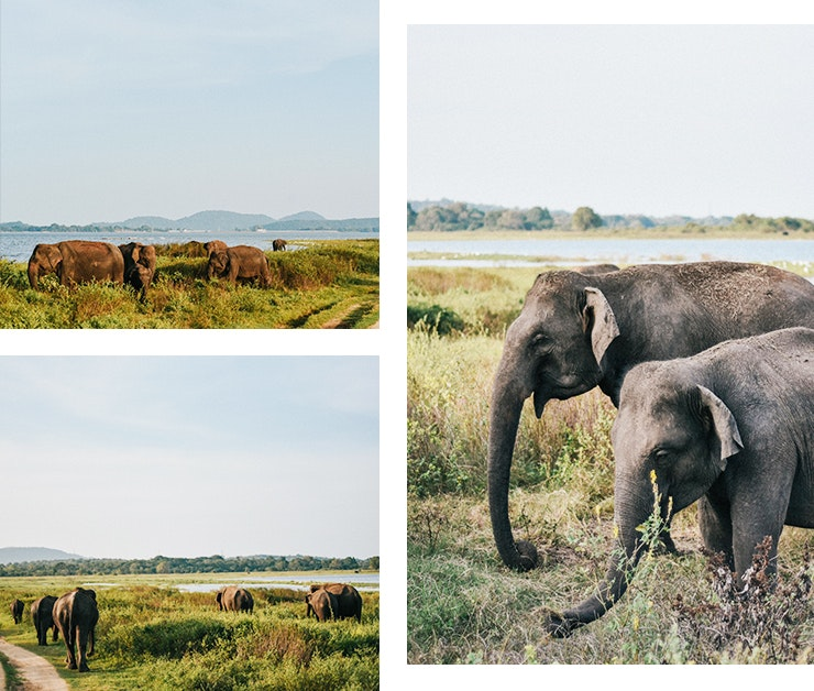things-to-do-in-sri-lanka-minneriya-national-park