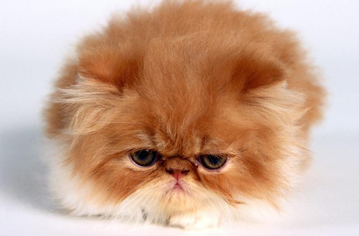 Uber Kittens Auckland