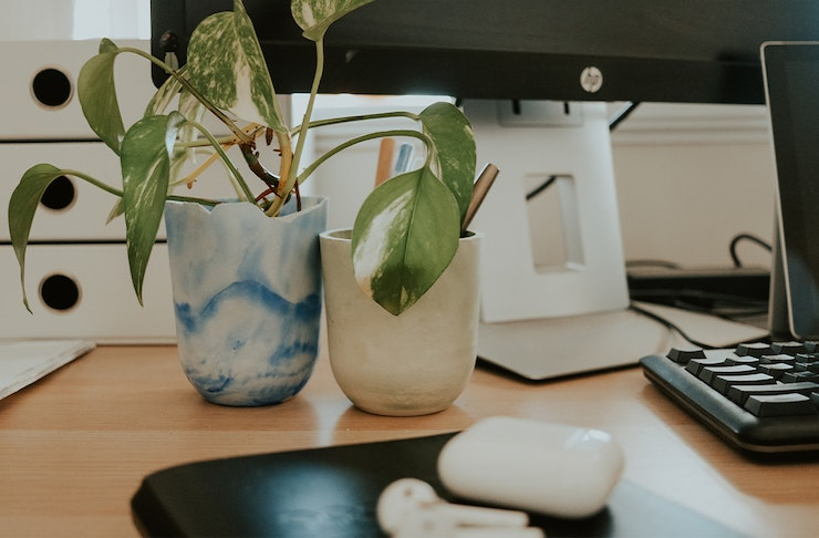 two pots with plants in them on a desk