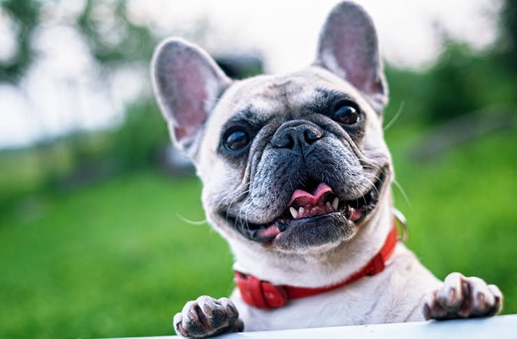 We've Found A Music Festival You Can Take Your Dog To!