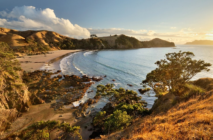 where to snorkel in Auckland, where to dive in Auckland, best snorkelling spots in Auckland