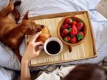 World's Best Dog Friendly Hotels