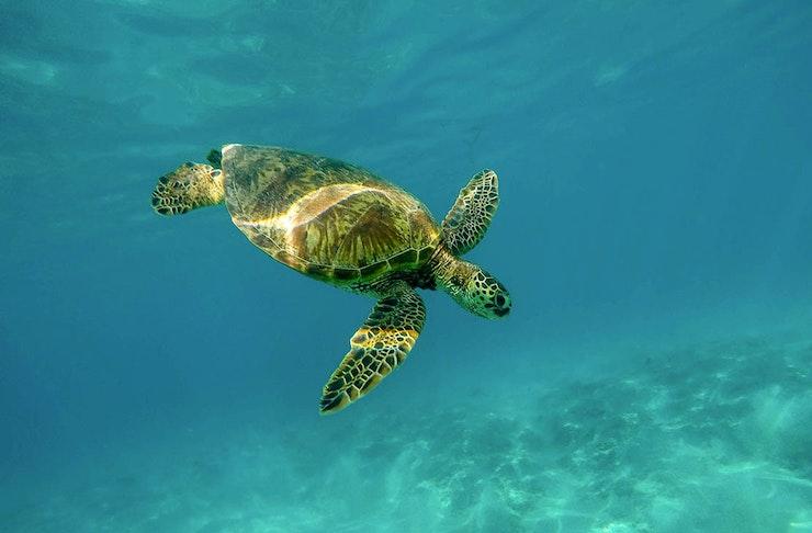 Sri Lanka Turtle Sanctuary