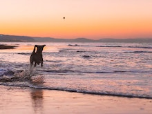 Grab Your Furry Pal, These Are 12 Of The Best Dog-Friendly Walks In Sydney