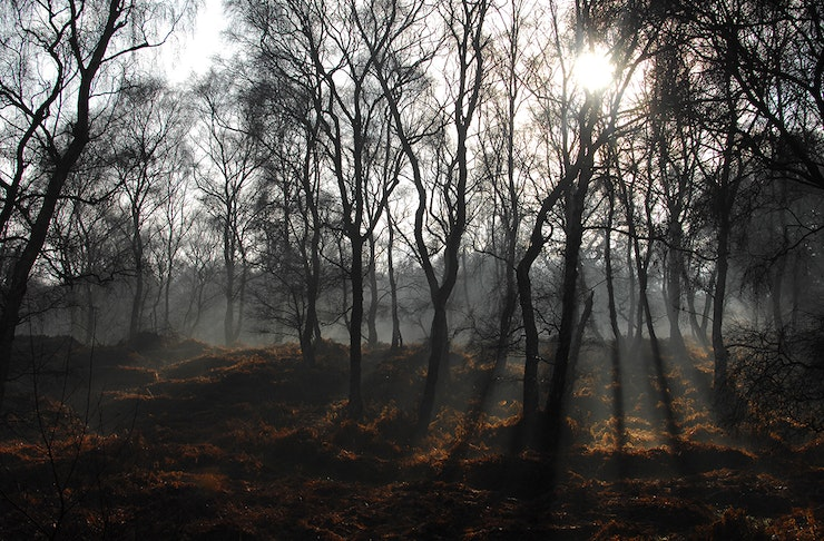 an eerie scene as light seeps through a cluster of trees.