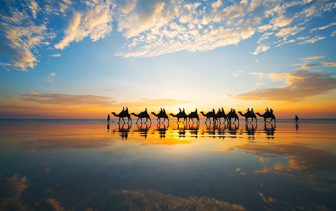 a line of camels walk along broome beach at sunset.