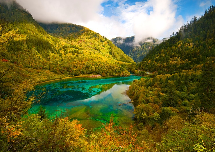 Snap Instagram Gold At 10 Of The World's Most Incredible Forests