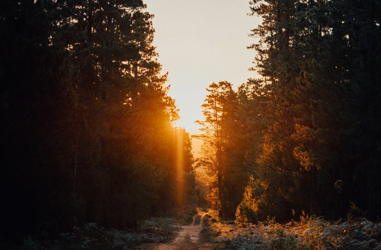 forest walk in Marramarra National Park