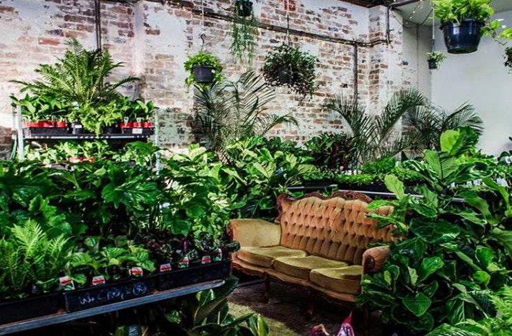 jungle-collective-plant-house-party