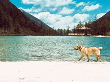 Pay For Your Next OS Trip Just From Pup-Sitting