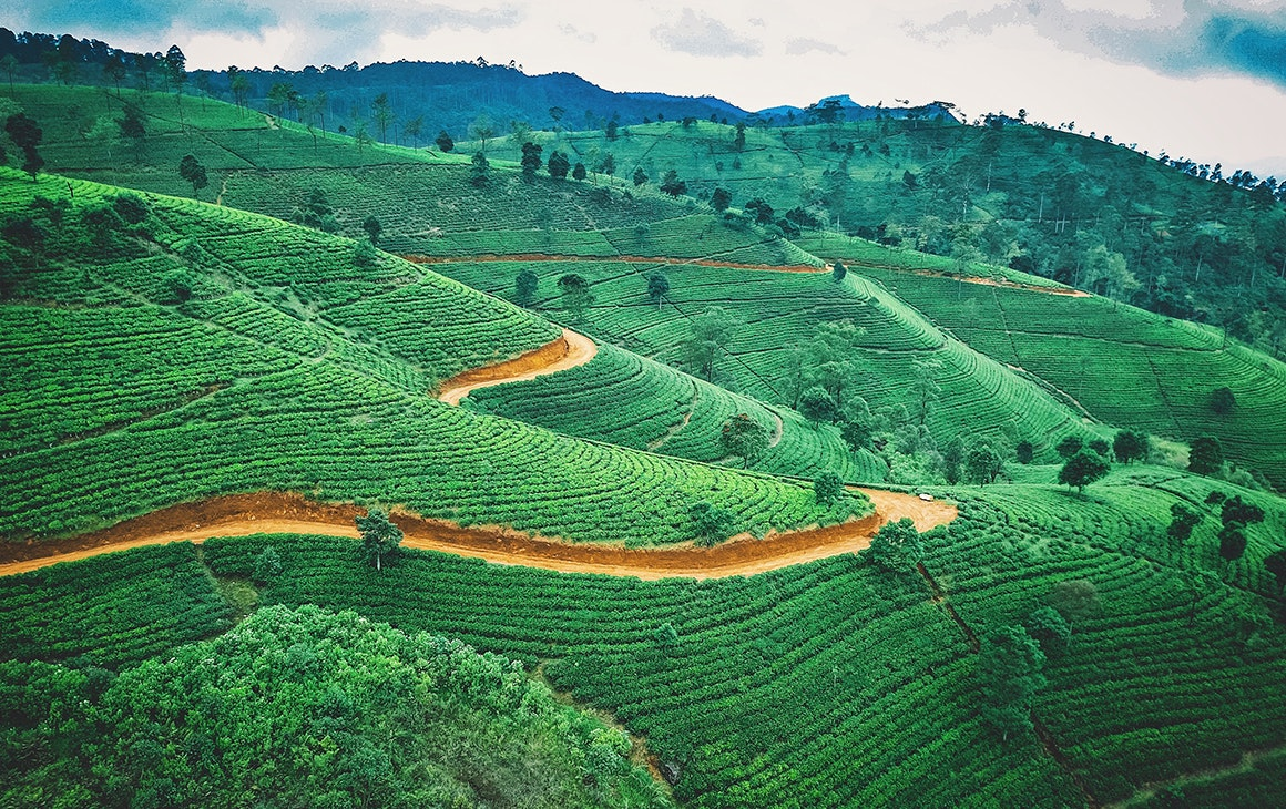 a stunning green tea plantation in sri lanka